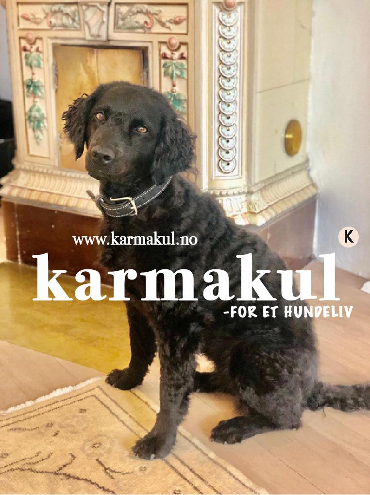 www.karmakul.no Karmakul-for et hundeliv! Nettmagasin for hundeeiere, eller for deg som tenker på å bli det.